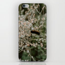 Wooly Bear Caterpillar on Plants - Big Bend iPhone Skin