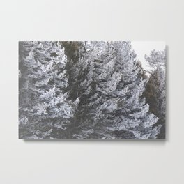 Catching Frost Metal Print
