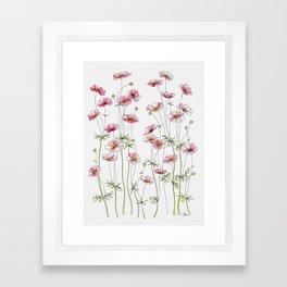 Pink Cosmos Flowers Framed Art Print