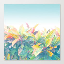 After the rain / Tropical Croton Leaves 4 Canvas Print