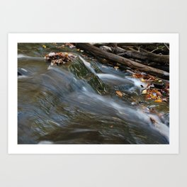 Forest Stream 2 Art Print