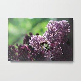 Lilac in Almaty  Metal Print
