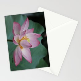 Hangzhou Lotus Stationery Cards