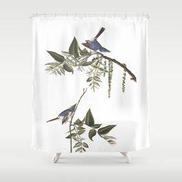 Bluegrey flycatcher working, Birds of America, Audubon Plate 84 Shower Curtain