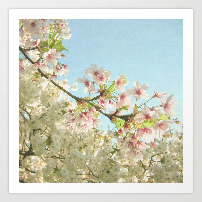 Pink on White Art Print