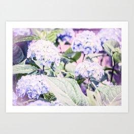 Bountiful Blue Hydrangea Art Print