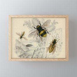 Naturalist Bee And Wasps Framed Mini Art Print