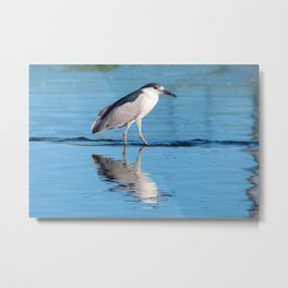 Black-Crowned Night Heron 5 Metal Print