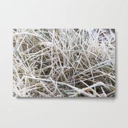 grass in winter Metal Print