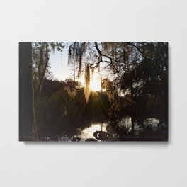 Afternoon Glow Upon Moss Covered Trees In New Orleans Metal Print