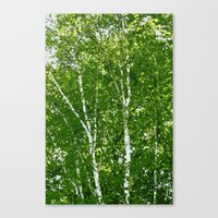 birch Canvas Prints featuring Birch Trees by Nadia Bonello - Trū Artwear