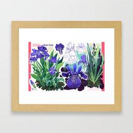 Blue Flag Framed Art Print
