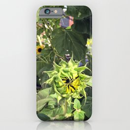 This sunflower is closed until further notice iPhone Case