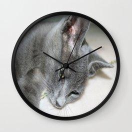 Close Up Of A Grey Kitten Wall Clock