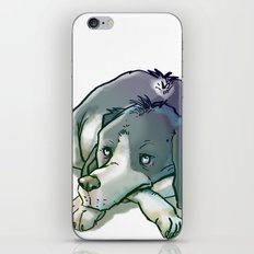 Quiltro Dog iPhone & iPod Skin