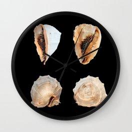 Mollusks Wall Clock