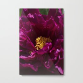 Peony Bloom Metal Print