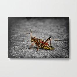 Grass Hopper.... Metal Print