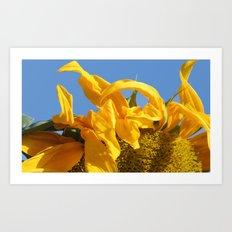 Facing the Sun Art Print