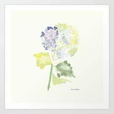 Watercolor Hydrangea Art Print