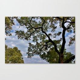 Language of Trees Canvas Print