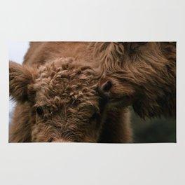 Scottish Highland Cattle Calves - Babies playing Rug