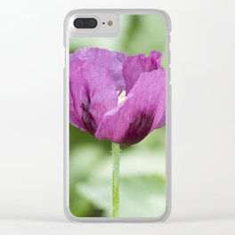 Hungarian Blue Bread Seed Poppy With Seed Pods Clear iPhone Case
