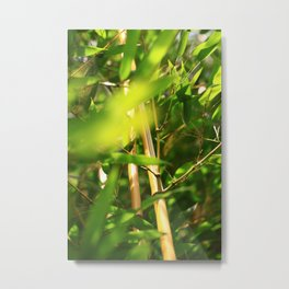 Bambus Metal Print
