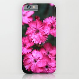 Pink Dianthus with Raindrops 2 iPhone Case
