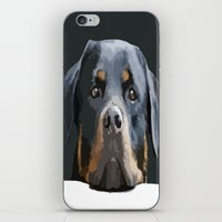 rottweiler iPhone & iPod Skins featuring Rottweiler Portrait Vector by taiche