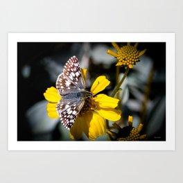 Butterfly on Yellow Flower Art Print