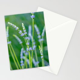 New Lavender Stationery Cards