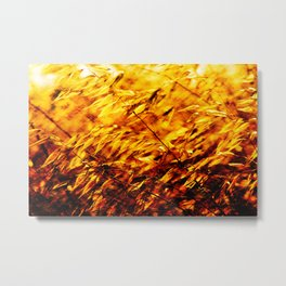 Golden Summer Weeds Windy Day Metal Print