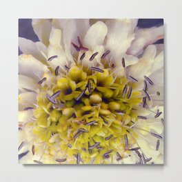 Flower Purple Yellow Metal Print