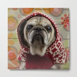 Mr. Buttons, Professional Pug Metal Print