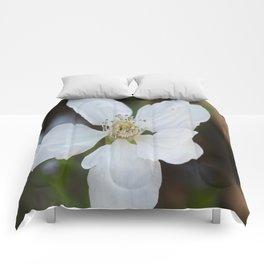 Dewberry Comforters