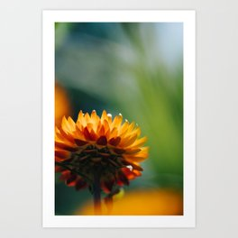 Orange Flower Macro Art Print