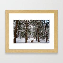 Dog exploring a snowy forest Framed Art Print