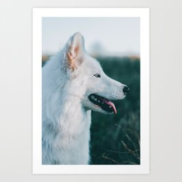 White Wolf Tongue Out (Color) Art Print