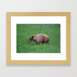 Cinnamon bear in Jasper National Park | Canada Framed Art Print
