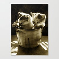 kittens Canvas Prints featuring Kittens by Northern Light Images