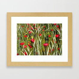 Red Poppies In A Cornfield Framed Art Print
