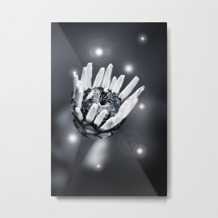 BLACK BEAUTY II Metal Print