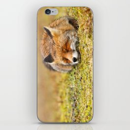Comfortably Fox (red fox sleeping) iPhone Skin