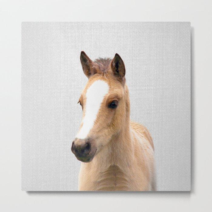 Baby Horse - Colorful Metal Print