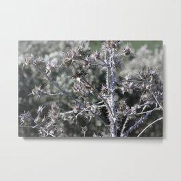Thorn Beauty Metal Print