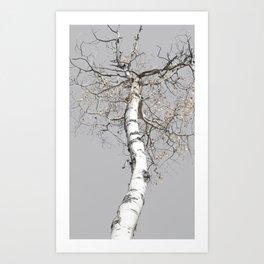 Birch White Art Print