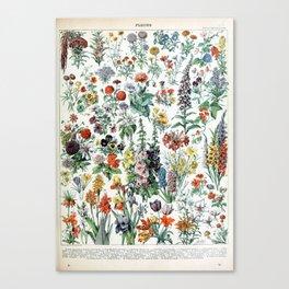 Adolphe Millot Fleurs A Canvas Print