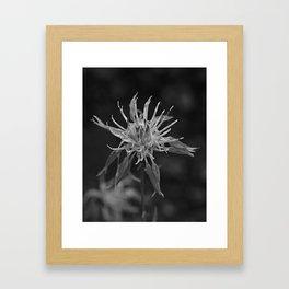 Knapweed Framed Art Print