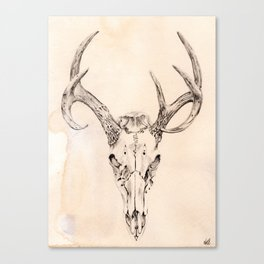 Deer Skull and Antlers Canvas Print